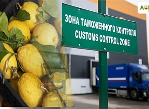 About 450 kg of lemons from Uzbekistan tried to import in carry-on baggage
