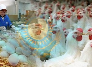 Kazakhstan receives avian influenza-free status